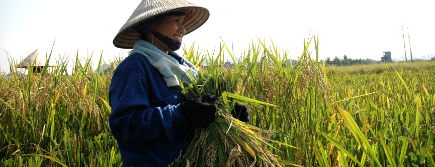 Agricultural Tour In Vietnam – More Than Just Rural Tourism
